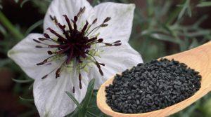 فروش اینترنتی انواع دانه سیاه دانه