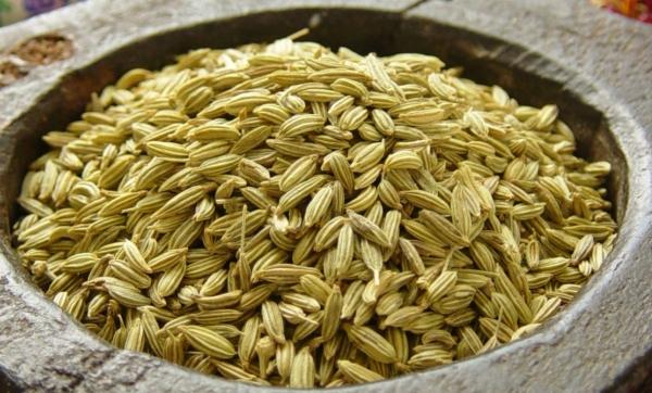 تهیه انواع دانه رازیانه همدان