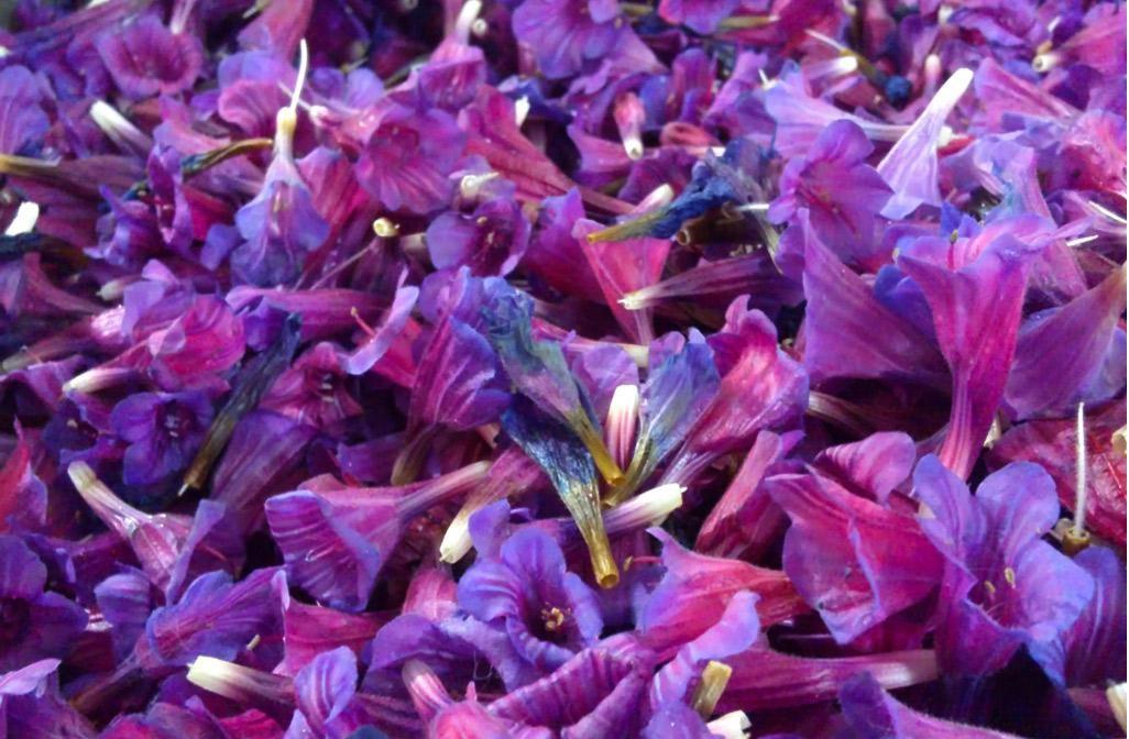 فروش انواع دمنوش گل گاوزبان قزوین