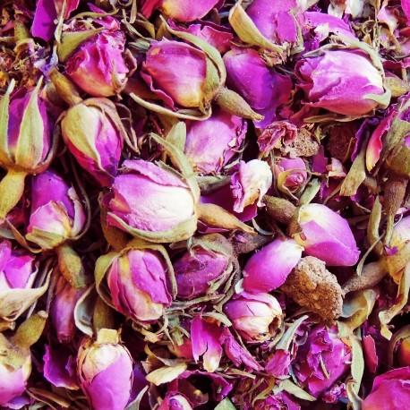 صادرات غنچه گل محمدی