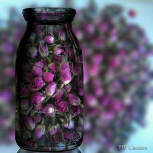 فروش غنچه گل محمدی