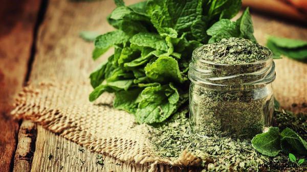 قیمت فروش انواع سبزی نعناع فلفلی خشک