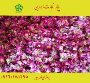 قیمت گل محمدی سال 1400