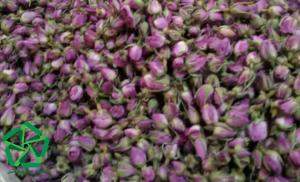 قیمت غنچه گل محمدی خشک شده سال 1400