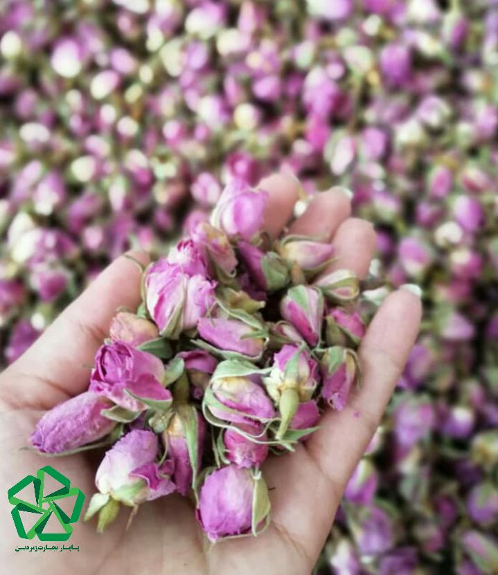 انواع غنچه گل محمدی