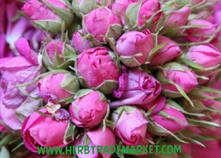 غنچه گل محمدی مرغوب